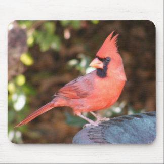 鳥のBathの(鳥)ショウジョウコウカンチョウ マウスパッド