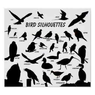 鳥は(29)ポスターのシルエットを描きます ポスター