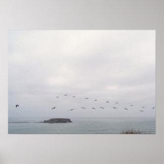 鳥飛行中にポスター ポスター