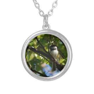 《鳥》アメリカゴガラのネックレス シルバープレートネックレス