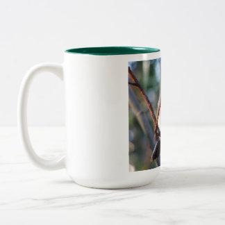 《鳥》アメリカゴガラのマグ ツートーンマグカップ