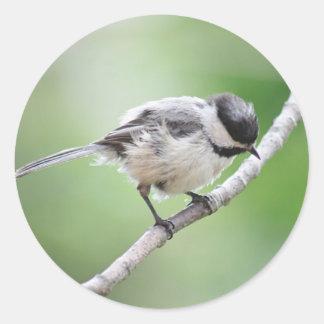 《鳥》アメリカゴガラの写真 ラウンドシール