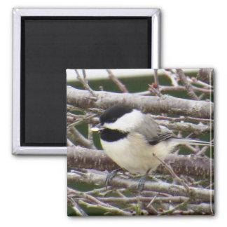 《鳥》アメリカゴガラの磁石 マグネット