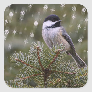 《鳥》アメリカゴガラの雪の薄片の松の木の冬 スクエアシール