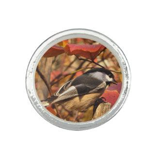 《鳥》アメリカゴガラの鳥が付いている自然の秋の群葉 リング
