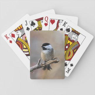 《鳥》アメリカゴガラ トランプ