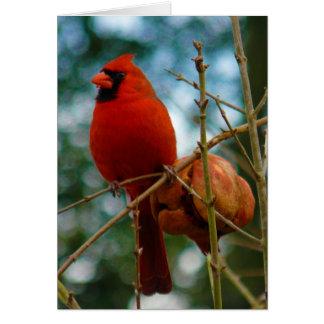 (鳥)ショウジョウコウカンチョウおよびザクロ カード