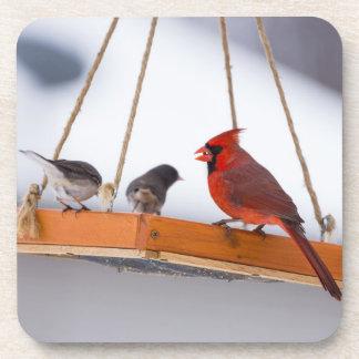(鳥)ショウジョウコウカンチョウおよびユキヒメドリ コースター