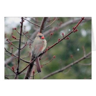 (鳥)ショウジョウコウカンチョウ4539の横のカード カード