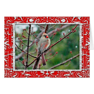 (鳥)ショウジョウコウカンチョウ4539横のカードクリスマスカード カード