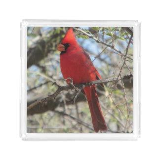 (鳥)ショウジョウコウカンチョウ アクリルトレー