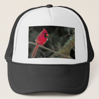 (鳥)ショウジョウコウカンチョウ キャップ