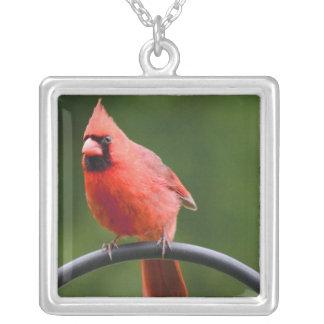 (鳥)ショウジョウコウカンチョウ シルバープレートネックレス