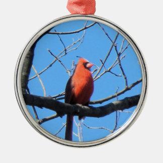 (鳥)ショウジョウコウカンチョウ メタルオーナメント