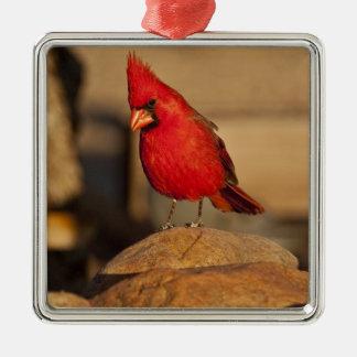 (鳥)ショウジョウコウカンチョウ、南東Richmondenaのcardinalis メタルオーナメント