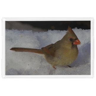 (鳥)ショウジョウコウカンチョウ、虚栄心の皿 アクリルトレー