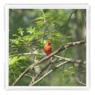 (鳥)ショウジョウコウカンチョウ、香水の皿 アクリルトレー