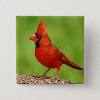 (鳥)ショウジョウコウカンチョウ 5.1CM 正方形バッジ