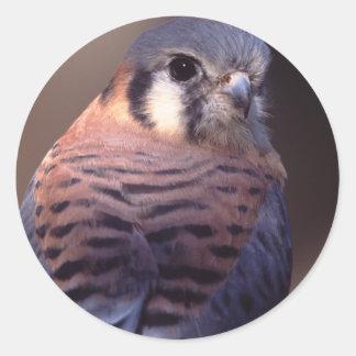 《鳥》ハヤブサ ラウンドシール