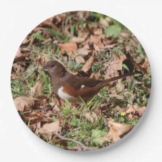 鳥、紙皿 ペーパープレート