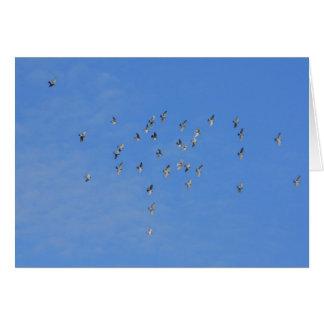 鳩の群 カード