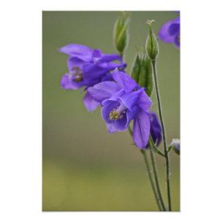 鳩の花 フォトプリント