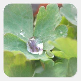 鳩の葉の雨滴 スクエアシール