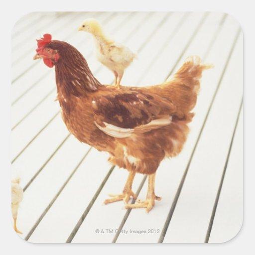 鶏 2 ひよこ 木 床、 正方形シール・ステッカー