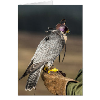 鷹狩の挨拶状 カード