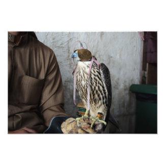 鷹狩の《鳥》ハヤブサの写真のプリント フォトプリント