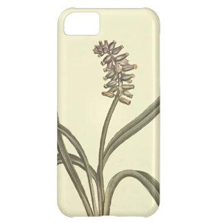 麝香のムスカリの植物の絵 iPhone5Cケース