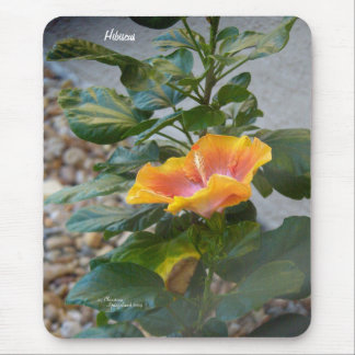 黄橙色のハイビスカスの花のマウスパッド マウスパッド