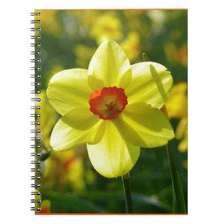 黄橙色のラッパスイセン02.2o ノートブック