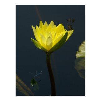黄色いはす《植物》スイレンの郵便はがき ポストカード