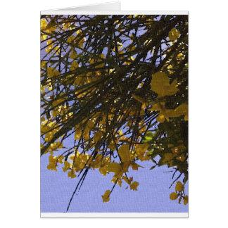黄色いほうき カード