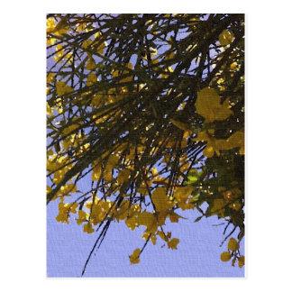 黄色いほうき ポストカード