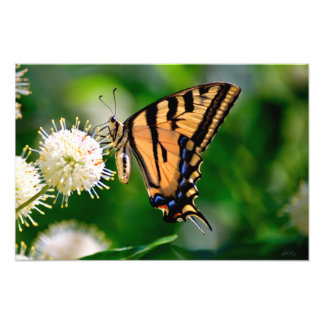 黄色いアゲハチョウの蝶 フォトプリント