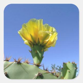 黄色いウチワサボテンサボテンの花 スクエアシール