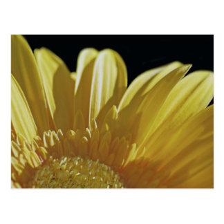 黄色いガーベラのデイジー ポストカード