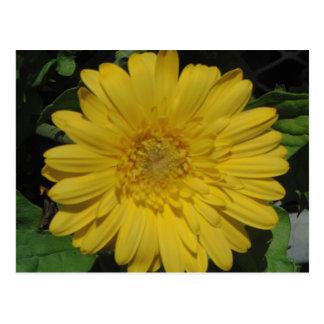 黄色いガーベラ/ガーベラのデイジー ポストカード
