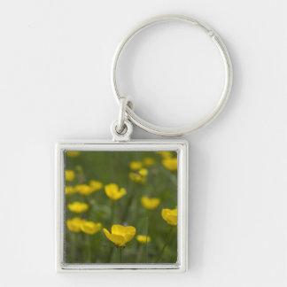 黄色いキンボウゲの花 シルバーカラー正方形キーホルダー