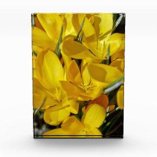 黄色いクロッカスの花 表彰盾