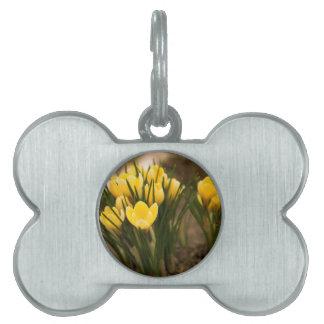 黄色いクロッカスは最初に花はねます ペットネームタグ