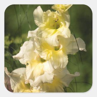 黄色いグラジオラスの花のスパイク スクエアシール