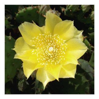 黄色いサボテンのウチワサボテンの花 フォトプリント