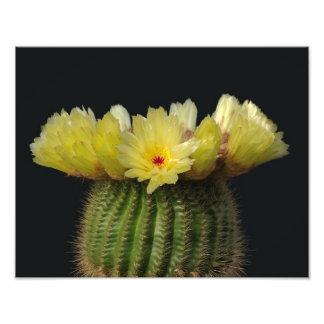 黄色いサボテンの花 フォトプリント