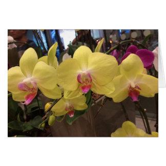 黄色いシンガポールの蘭の挨拶状 カード