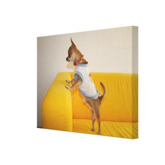 黄色いソファーのチワワの子犬 キャンバスプリント
