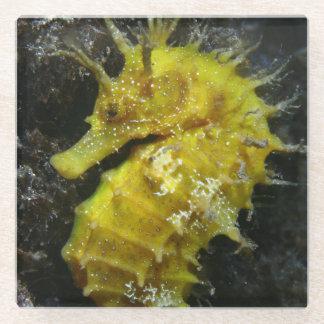 黄色いタツノオトシゴ|の海馬Guttulatus ガラスコースター