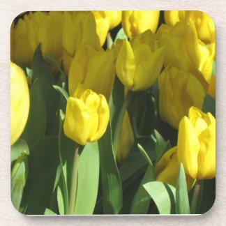 黄色いチューリップ コースター